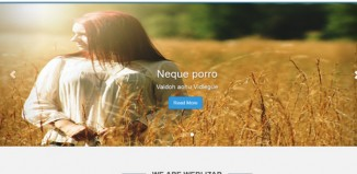 Best Free Wordpress Themes for Developers